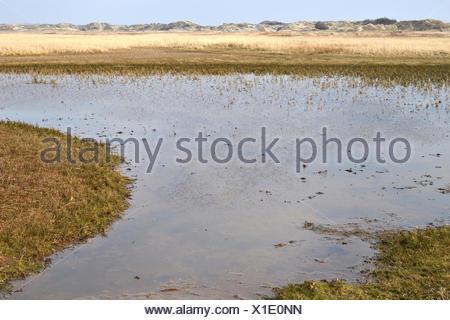 Nature reserve De Slufter on Texel. - Stock Photo