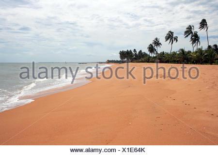 on the sandy beach of sri lanka - Stock Photo