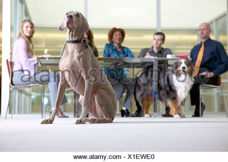 Businesspeople in a meeting with dogs - Stock Photo