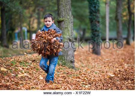 Young boy carrying bundle of autumn leaves in park - Stock Photo