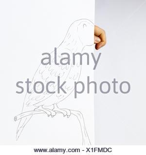 Conceptual parrot - Stock Photo
