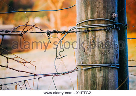 Close-Up Of Barbed Wire Fence With Wooden Post - Stock Photo