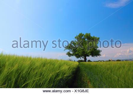USA, Idaho, Bonneville County, Idaho Falls, Tree in a field, Idaho Falls, Idaho, America, USA - Stock Photo