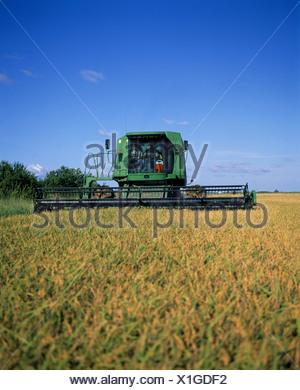 how-long-rice-mature-louisiana