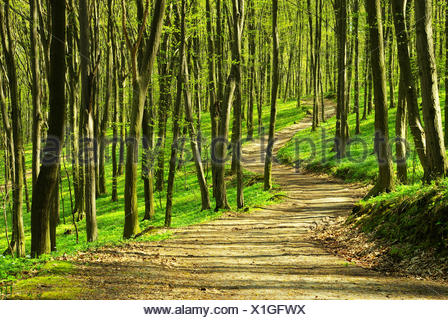 tree trees sunlight spring bouncing bounces hop skipping frisks jumping jump woods spiritual plants divine wilderness path way - Stock Photo