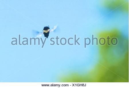 lampyridae / glowworm / fireflies / lightning bugs - Stock Photo