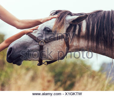 Hands of woman and little girl stroking horse - Stock Photo