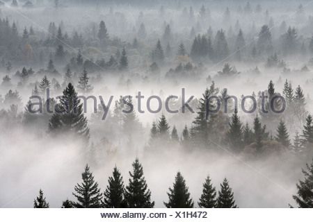 morning mood in Pupplinger Au at Isar river, Wolfratshausen, Bavaria, Germany - Stock Photo