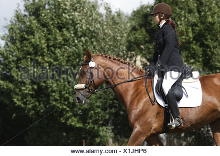 Reiterin auf Deutschem Sportpferd / riding woman - Stock Photo
