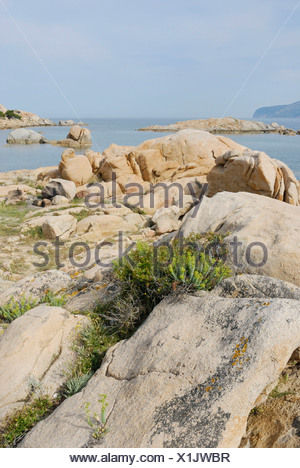 Mediterranean vegetation growing in granite rock crevices at the coast near Olbia, Sardinia, Italy, Europe - Stock Photo