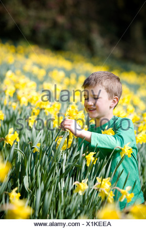 A young boy holding a daffodil - Stock Photo