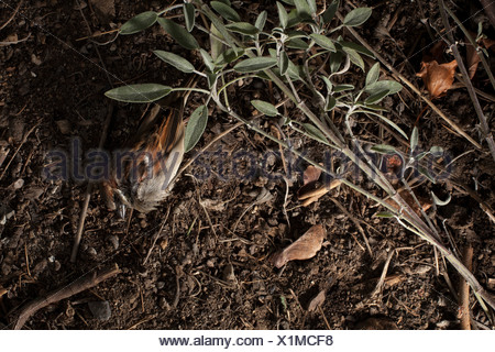 Dead bird in garden - Stock Photo
