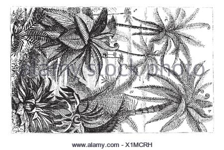 Arborescent Ferns during the Carboniferous Period, vintage engraved illustration  Trousset encyclopedia 1886 - 1891 - Stock Photo