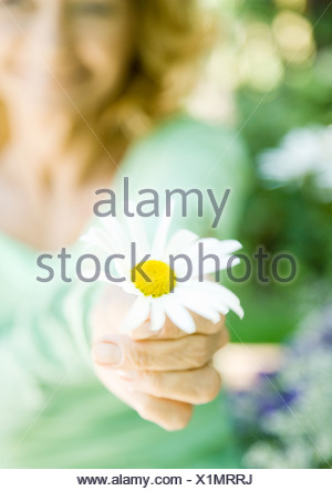 Senior woman holding out flower, focus on flower in foreground - Stock Photo