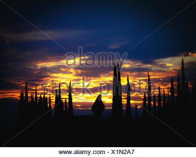 Silhouette Trees Against Dramatic Sky During Sunset - Stock Photo