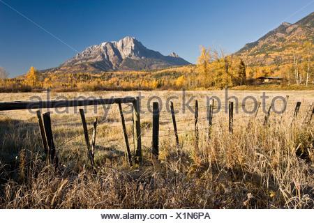 Field and Mount Hosmer in autumn near Fernie, BC, Canada.