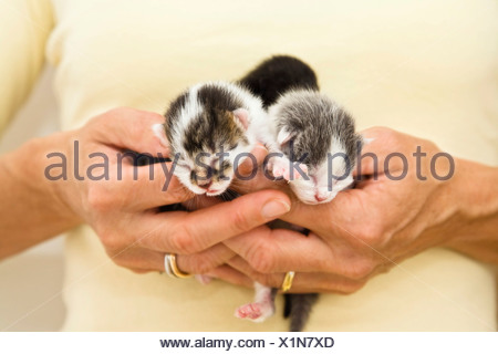 Three newborn kittens in woman's hand - Stock Photo