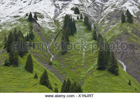 Austria, Vorarlberg, Hochtannberg Pass, spruces, snow, - Stock Photo