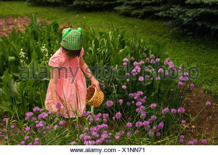 Girl collecting chive blossoms in a garden - Stock Photo