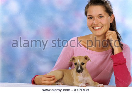 young woman with Whippet dog - puppy - Stock Photo