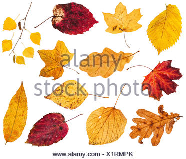 collage from various yellow and red leaves - Stock Photo