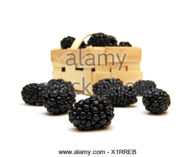 a few blackberries (Rubus sectio Rubus) - Stock Photo