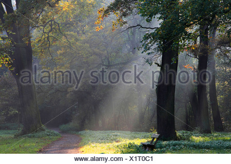 sun beams in autumn forest, Germany - Stock Photo
