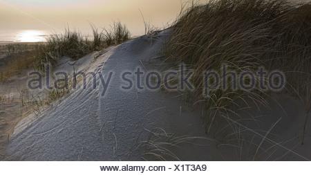 Dunes frost areas Egmond aan Zee Noord-Holland Netherlands Landscape Winter Beach scenery coast shore sandy beach sand grass - Stock Photo