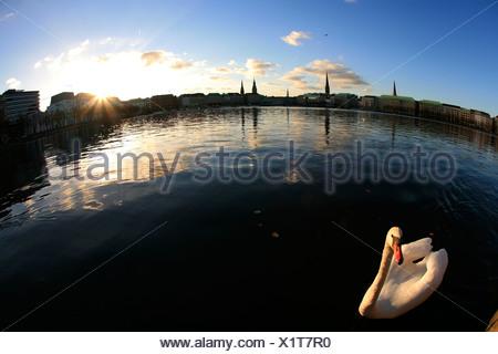 Swan on the Inner Alster, Hamburg, Germany - Stock Photo