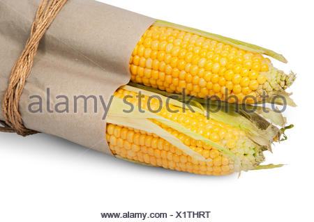 Several corn cob in paper bag tied with rope - Stock Photo