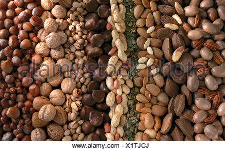 Assorted nuts in rows: pecans, Brazil nuts, almonds, peanuts, chestnuts, pistachios, walnuts and hazelnuts, studio. - Stock Photo