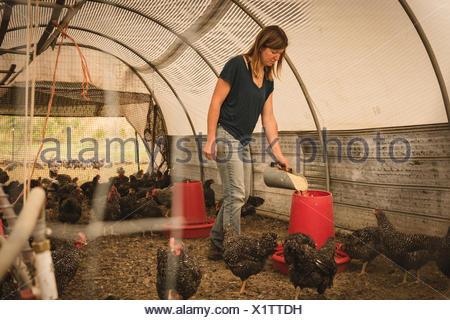 Female farmer feeding the hens in henhouse - Stock Photo