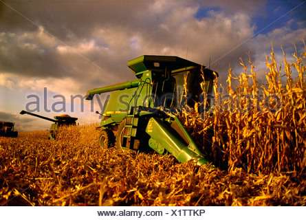 Agriculture - Combines harvest grain corn during an Autumn sunset / Rock County, Wisconsin, USA. - Stock Photo