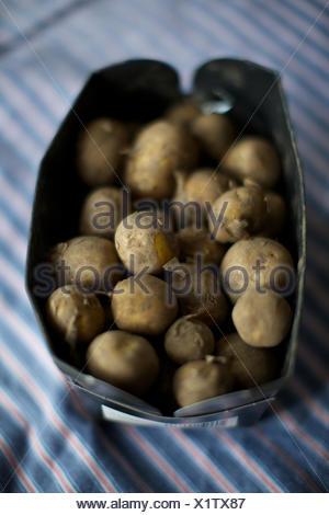 fresh new potatoes in basket. muddy, potato, food, root vegetable. - Stock Photo