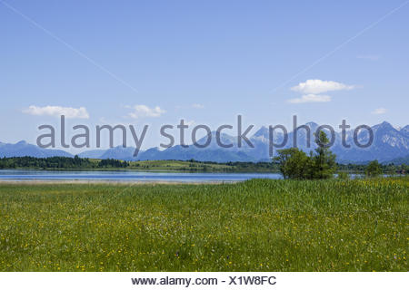 Blick auf den Bannwaldsee im Ostallgäu, Königswinkel, Tannheimer Alpen, Overlooking the Bannwaldsee in Ostallgaeu, Koenigswinkel - Stock Photo
