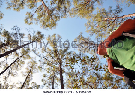 A backpacker stands under the tall pine trees at Bastrop State Park. - Stock Photo