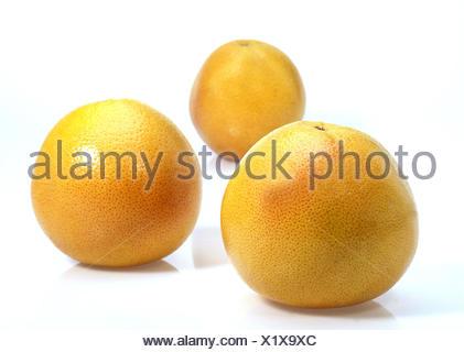 Grapefruit, Citrus paradisi, white background, - Stock Photo