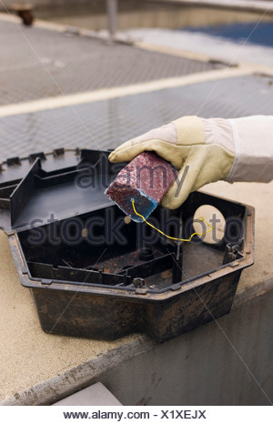 An exterminator equips a rat trap with rat poison, Germany, Europe - Stock Photo
