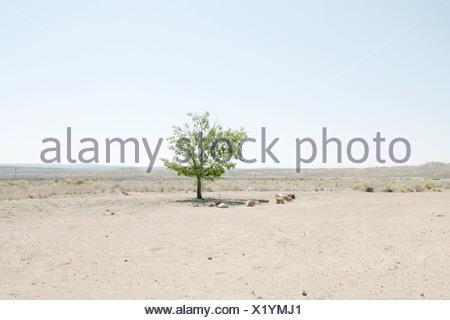 Lone tree in desert landscape - Stock Photo