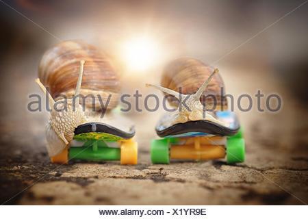 escargots - Stock Photo