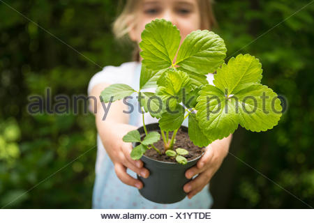 Girl gardening, holding potted plant - Stock Photo