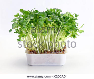 Watercress in Tray - Stock Photo