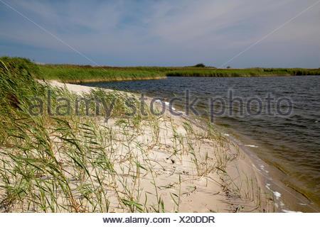 Naturschutzgebiet Riedensee nature reserve, Bukspitze or Buk cape, Baltic resort Kuehlungsborn, Mecklenburg-Western Pomerania - Stock Photo