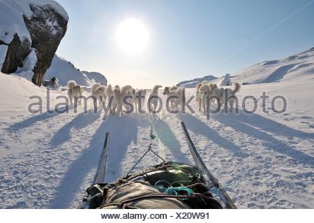 Dog sledding trip to Ilulissat Fjord, Greenland, Arctic North America - Stock Photo