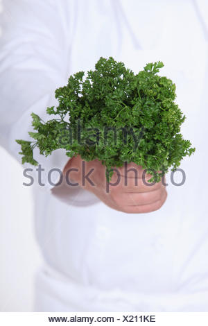 A bunch of parsley - Stock Photo