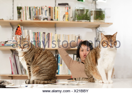 Funny image of cats and woman in home. - Stock Photo