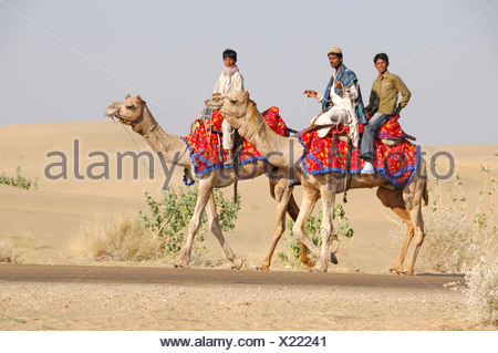 Indians on camels in Jaisalmer, Rajasthan, northern India, Asia - Stock Photo