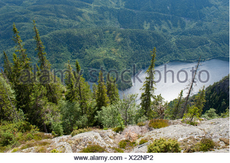 Aerial view onto conifers, Spruce trees (Picea abies), Lake Bandak, Lårdalstigen near Dalen, Lardalstigen, Telemark, Norway - Stock Photo