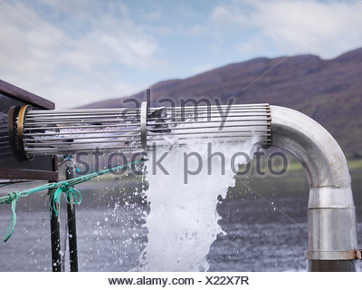 Salmon being harvested at fish farm - Stock Photo