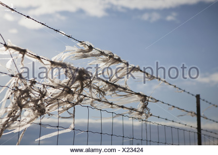 Seattle Washington USA Plastic bags caught on barbed wire fence - Stock Photo